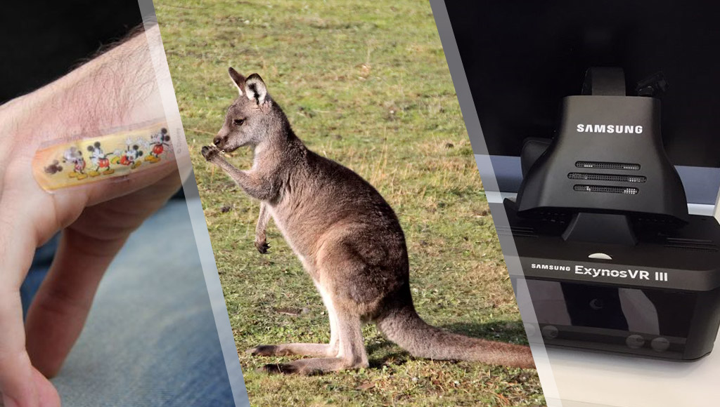 Opal card inserted into a hand, kangaroo hanging out and Samsung's new headset reference design